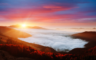 壁紙(ウォールミューラル) - Incredible morning moment in alpine foggy valley. Location Carpathian mountain, Ukraine, Europe.
