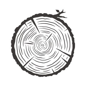 Wood texture rings slice of tree wooden stump