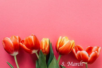 Bunch of beautiful pink tulip flowers on pink background with copy space. Top view for greeting cards for Birthday, Mothers day, Women's day and Valentines day concept.