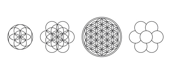 Flower of Life, Seed and Egg of Life. Geometric figures, spiritual symbols and sacred geometry. Circles forming symmetrical flower-like patterns. Illustration over white. Vector. Wall mural