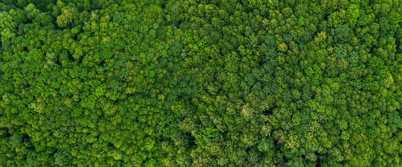 Canvas Prints Green top view on the forest panoramic