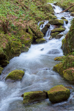 rapid water stream in the forest
