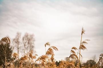 Jesienne pole, naturalna, sucha trawa na tle nieba