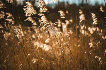 Jesienne pole, naturalna, sucha trawa w słoneczny dzień