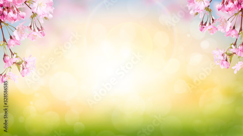 Pink cherry tree blossom flowers blooming in spring Easter sunrise for a Mothers Day background.