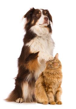 Cat and dog isolated on white background
