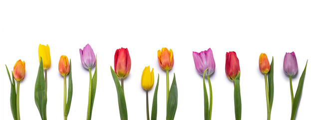 Tuinposter Tulp tulips isolated on white background