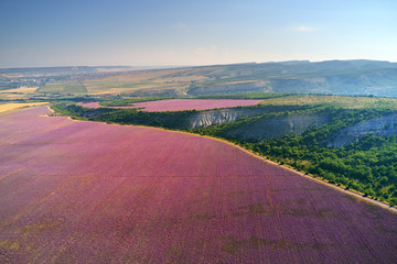 Wall Mural - Aerial meadow of lavender at day.