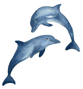 Two blue dolphins hand drawn watercolor illustration