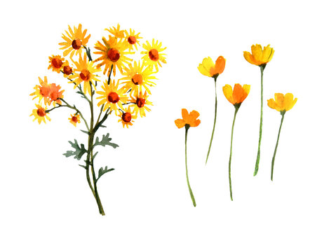 Set of watercolor summer wildf flower. Cute hand drawn illustration with yellow flower