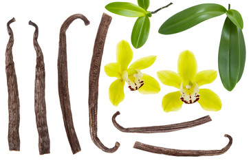 Vanilla pod stick and yellow flower with green leaf set or collection isolated on white background. Top view. Flat lay. Detail for design package