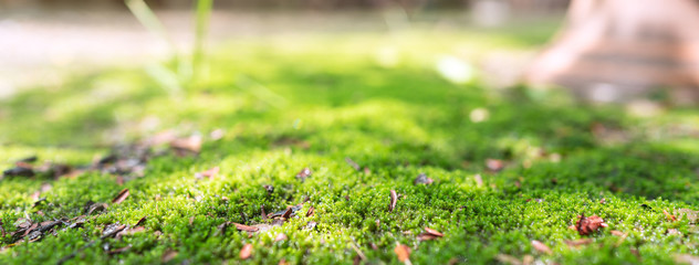 Surface of green moss background