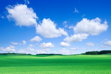 Wall Mural - Idyllic view, green field and the blue sky with white clouds