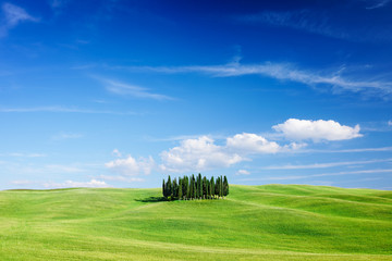 Wall Mural - Idyllic view, Italian beautiful landscape, group of cypresses among green fields of tuscany