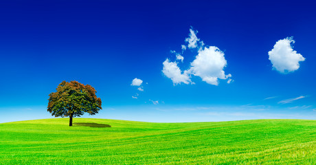 Wall Mural - Panoramic idyllic view, lonely tree on green field