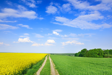 Wall Mural - Idyllic view, rural path among green fields, blue sky in the bac