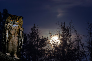 Wall Mural - The horned owl sits on a branch against the backdrop of a full moon rising on a pine forest at night.
