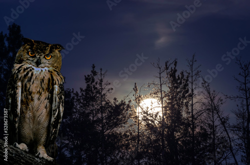 Wall mural The horned owl sits on a branch against the backdrop of a full moon rising on a pine forest at night.