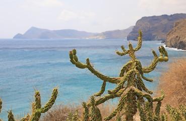 Papier Peint - cactus costa mediterraneo almería cala san pedro 4M0A7358-as20