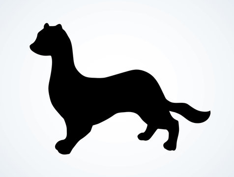 Least weasel. Vector drawing icon