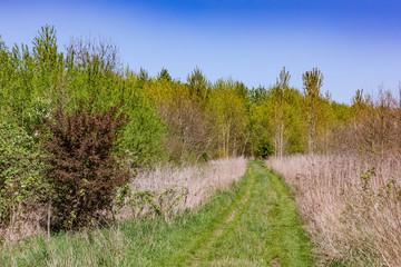Unberührter Naturweg durch sommerliche Landschaft