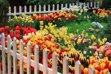 A beautiful little garden of spring color flowers of tulips and daffodils with a green meadow in...