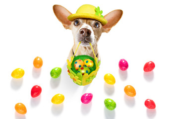 Keuken foto achterwand Crazy dog happy easter dog with eggs