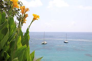 Papier Peint - costa mediterranea flores amarillas mar almería 4M0A7365-as20