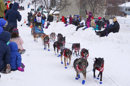 Musher Jessie Royer, bib 31, who finished in third place in the 2019 race, steers her sled down a hill in Anchorage during the ceremonial start of the 2020 Iditarod Trail Sled Dog Race