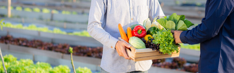 Two young asian man picking up fresh organic vegetable with basket together in the hydroponic farm beautiful, harvest and agriculture for healthy food and business concept, banner website.