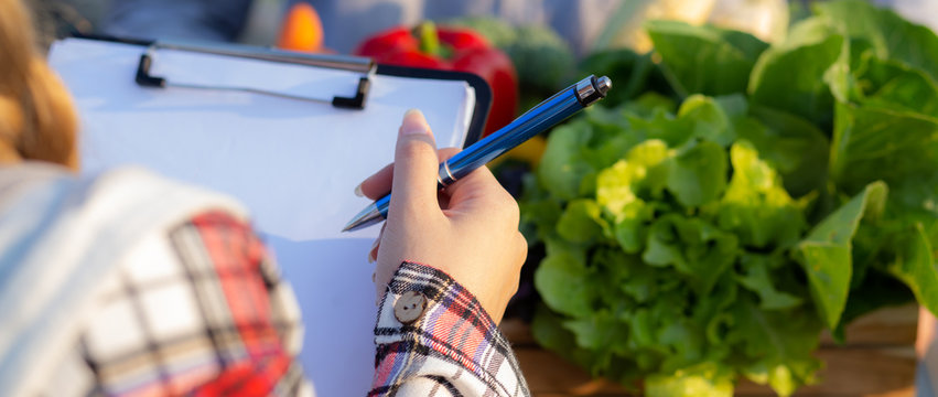 Young asian woman checking vegetable organic hydroponic farm and man harvest picking up fresh vegetable, girl writing record document grow of leaf, small business owner concept, banner website.