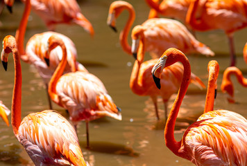 Foto op Canvas Flamingo Colorful pink flamingos