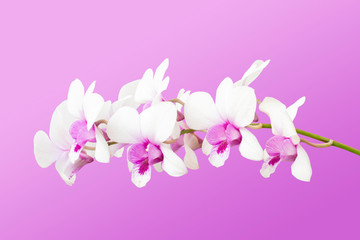 White and Purple orchid flower bouquet bloom included clipping path.