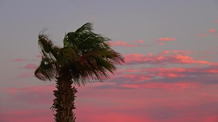 Wall Mural - Palm at sunset on beautiful sky background, 4k