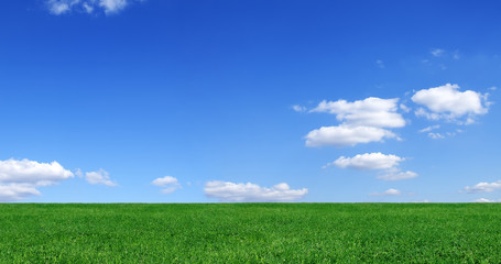 Wall Mural - Idyllic view, green field and blue sky with white clouds