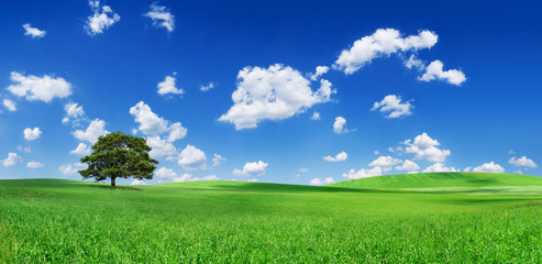 Wall Mural - Idyll, panoramic landscape, lonely tree among green fields