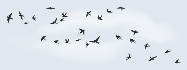 Flying birds silhouette. Flock of black marine birds, doves, seagulls or swallows for decoration, isolated black on white background. Vector freedom concept Fotomurales