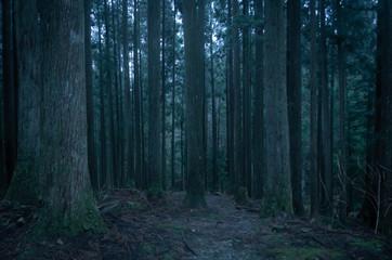 Photo sur Plexiglas Route dans la forêt 深い森