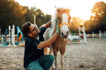 Young attractive male veterinarian enjoying with adorable little pony horse.