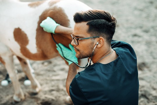 Young veterinarian examining with stethoscope a small and adorable pony horse.