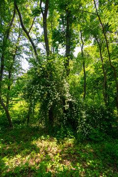 DSC_0638D3400 Trees in spring - Arlington's Great Meadow