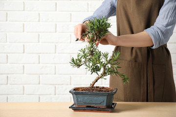 Papiers peints Bonsai Woman trimming Japanese bonsai plant at wooden table, closeup with space for text. Creating zen atmosphere at home