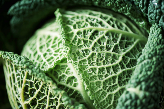 Raw green cabbage texture. Organic savoy cabbage background. Vegan and vegetarian diet concept