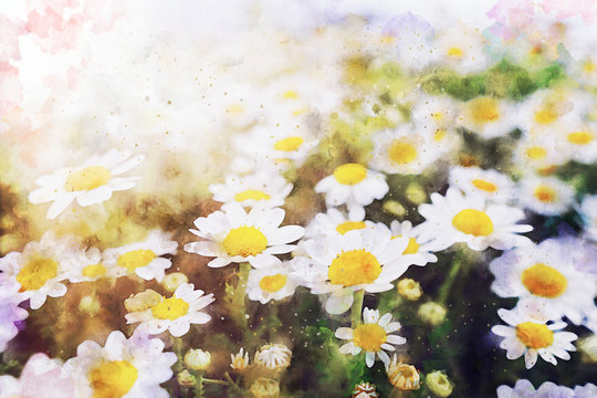 watercolor style illustration of white daisy flowers in the field