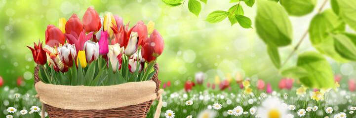 Frühling 491 Fotomurales