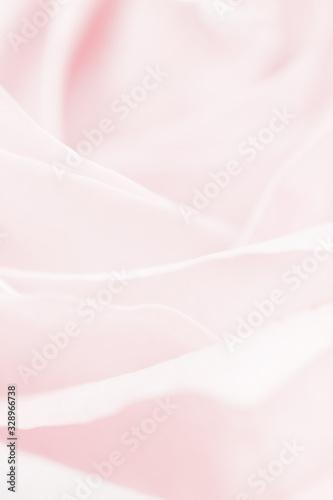 Tender rose flower in nature, floral art and botanical garden