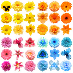 Photo sur Aluminium Pansies Big collection of various head flowers yellow, pink, blue and orange isolated on white background. Perfectly retouched, full depth of field on the photo. Top view, flat lay