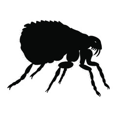Flea silhouette isolated on white background. Vector.