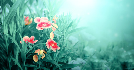 Fototapete - Beautiful magic spring scene with carnation flowers