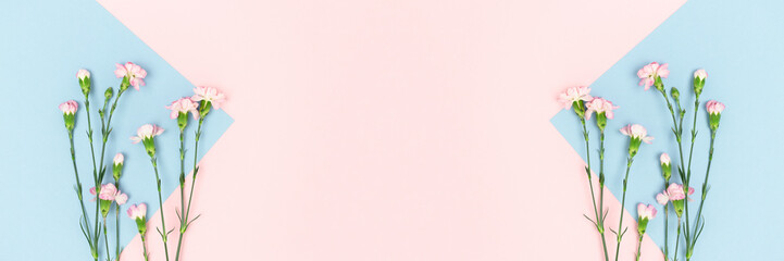 Banner with carnation flowers on a pink and blue pastel background. Floral composition with place for text.